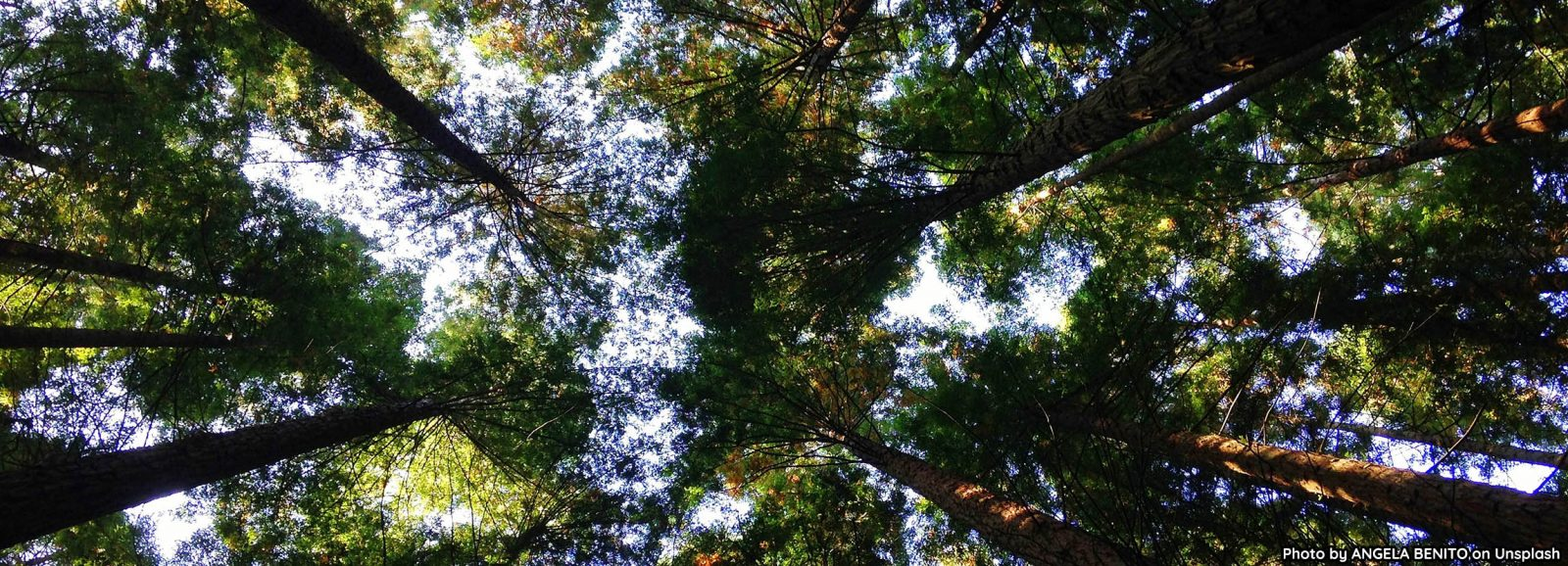 Photo of trees from the ground up